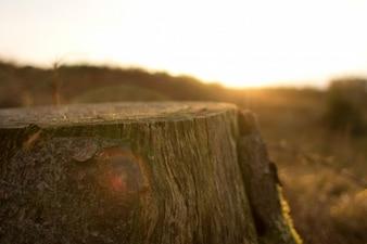 Tronco de árbol cortado