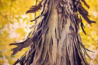 Tronco de árbol Riven