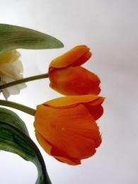tulipanes de color naranja, falso, yellowflowers
