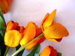 tulipanes de color naranja, naranja