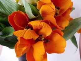 tulipanes de color naranja, yellowflowers, hojas