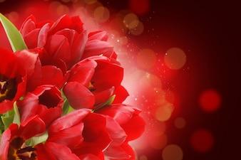 Tulipanes de color rojo sobre un fondo bokeh
