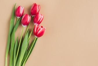 Tulipanes decorativos con espacio en blanco para el día de la madre