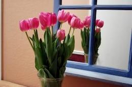 tulipanes reflejadas
