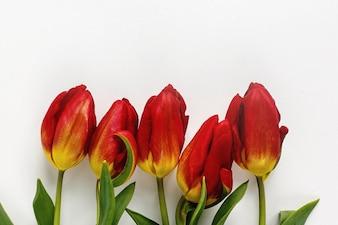 Tulipanes rojos