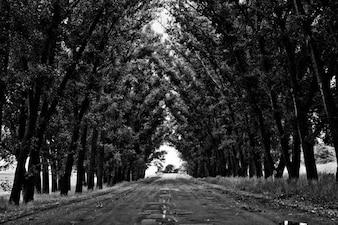 Túnel árbol
