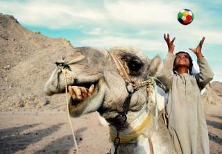 Un camello y un niño feliz