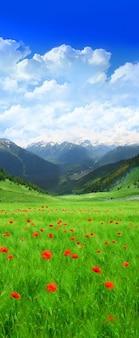 Un paisaje hermoso campo de material de imagen