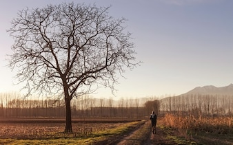 Un paseo solitario