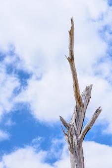 Una ramita de ramas de un árbol en un cielo azul y nubes de fondo blanco