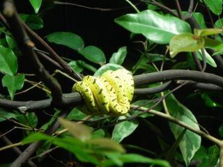 Una serpiente amarilla pequeña