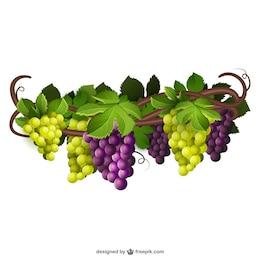 Uvas verdes y púrpuras