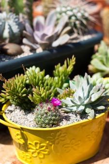 Variedad de cactus en mercado abierto