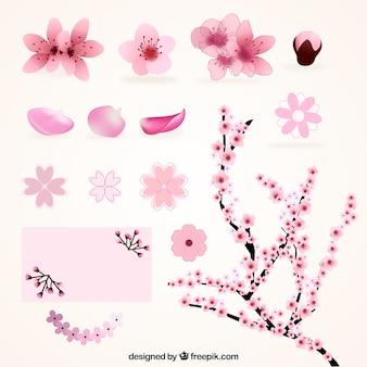 Variedad de flores de cerezo