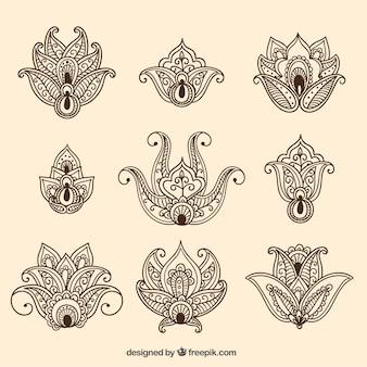 Variedad de flores ornamentales