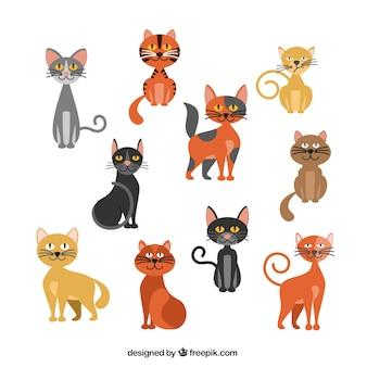 Variedad de gatos