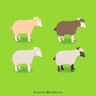 Variedad de ovejas