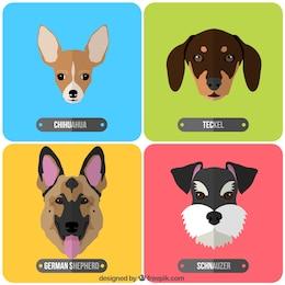 Variedad de razas de perros