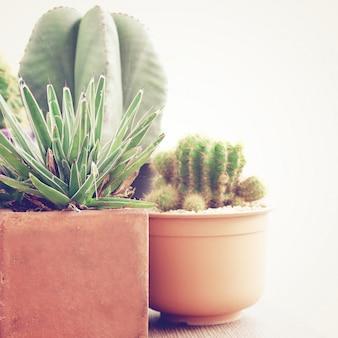 Varios de cactus con efecto de filtro retro