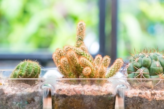 Vaso cactus decoración con sala vacía