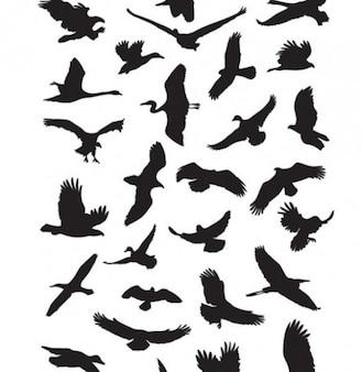 Vector de aves que vuelan paquete de gráficos siluetas