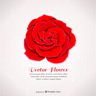 Plantilla vectorial con rosa roja