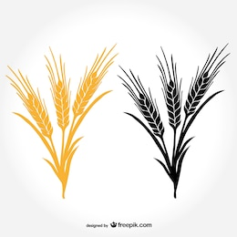Vectores de ramos de trigo