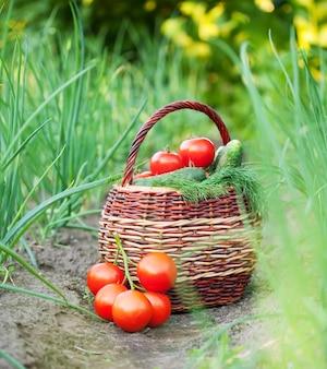 Vegetales cosechados en canasta