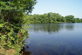 Verano del estanque