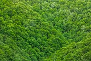 verde follaje textura hdr