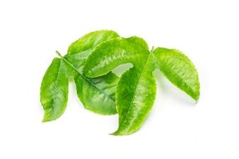 Verde, hojas, pasión, fruta, cierre, arriba, macro, tiro, conjunto, aislado, blanco, fondo