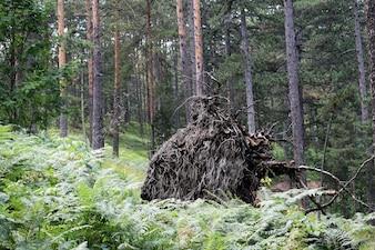 Vieja colmena en el bosque