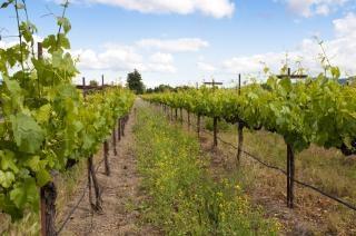 Vineyard Vines,