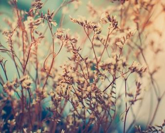 Vintage foto de flores silvestres en la puesta de sol