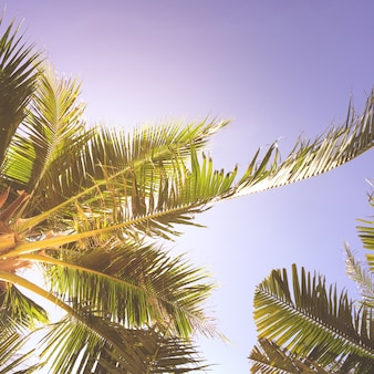 Vista de árbol pacífica verano se relaja