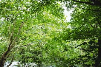 Vista del bosque verde