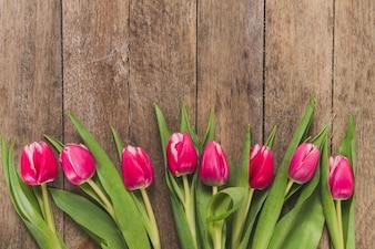 Vista superior de tulipanes en fila