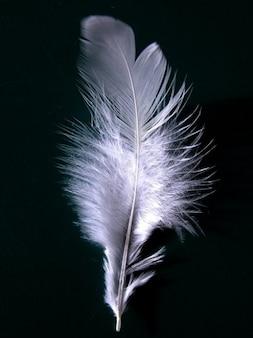volar fibroso ala plumaje primavera