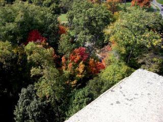 Washington DC, lugares de interés turístico, árbol