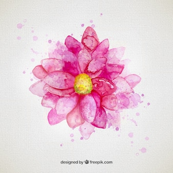 Flor de la acuarela en tonos rosa