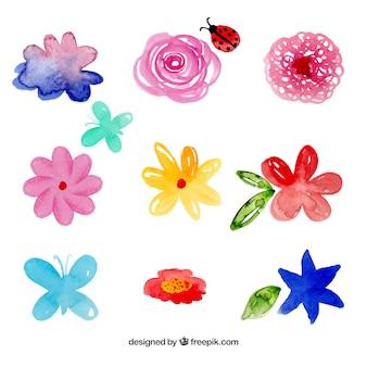 Colección de flores de acuarela