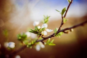 Flor blanca en la rama
