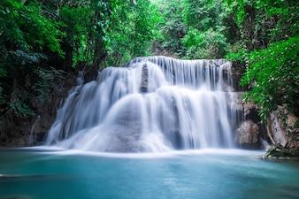 Wild Wood nivel otoño Tailandia