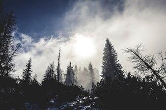 Pino Paisaje nevado invierno