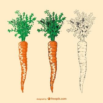 Zanahoria dibujado a mano