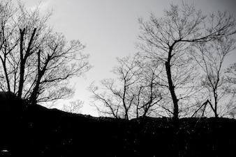 Zona oscura en el bosque