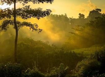 Alba sulla giungla