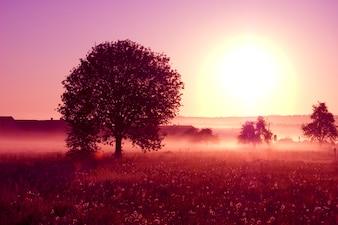 Albero con un grande sole