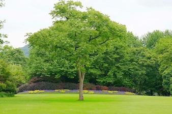 Albero di fronte un giardino