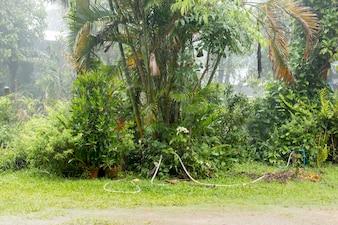 Albero fresco in pioggia
